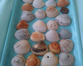 """Naturally """"Carved"""" Shells. Some With Holes. You Will Receive All That You See Here."""