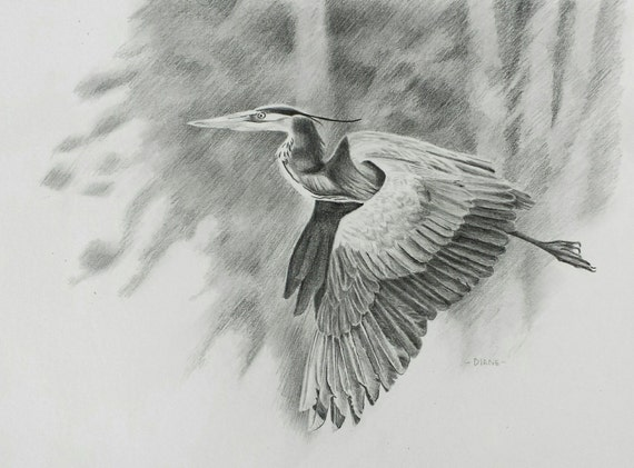 Items similar to flying heron pencil drawing print on etsy