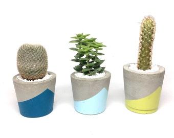 Small concrete planter or air plant holder