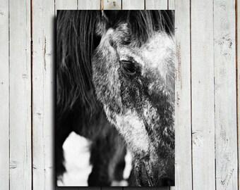 "Gentle Giant - 16x24"" canvas print - Black and White horse decor - Horse photography - Black Horse photography - Horse decor - Horse art"