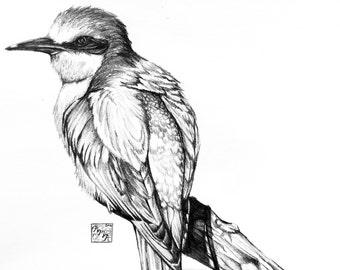 Bird Sketch Print