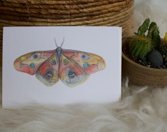 Owl Moth - Art Card
