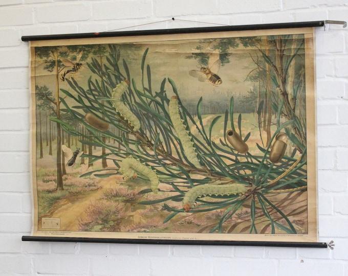 German Educational Chart Of The Caterpillar Circa 1930's