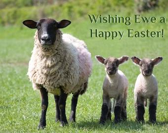 Happy Easter card - ewe - sheep - funny easter card - sheep easter card - easter greetings card - happy easter to ewe