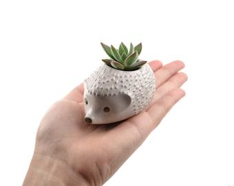 Tiny hedgehog planter - animal planter, ceramic planter -  white - made in Brazil