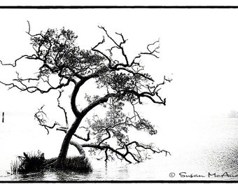 Tree Photograph in Black and White, Coastal Water Photograph, Nature Home Decor, Wall Art, Nature Landscape Photography, Survival