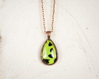 Real Butterfly Wing Necklace - Butterfly Pendant - Green and Black - Lime Pendant - Neon Green Pendant - Tear Drop Pendant - Copper Pendant
