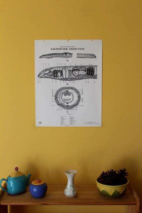 Beste Regenwurm Diagramm Arbeitsblatt Fotos - Mathe Arbeitsblatt ...