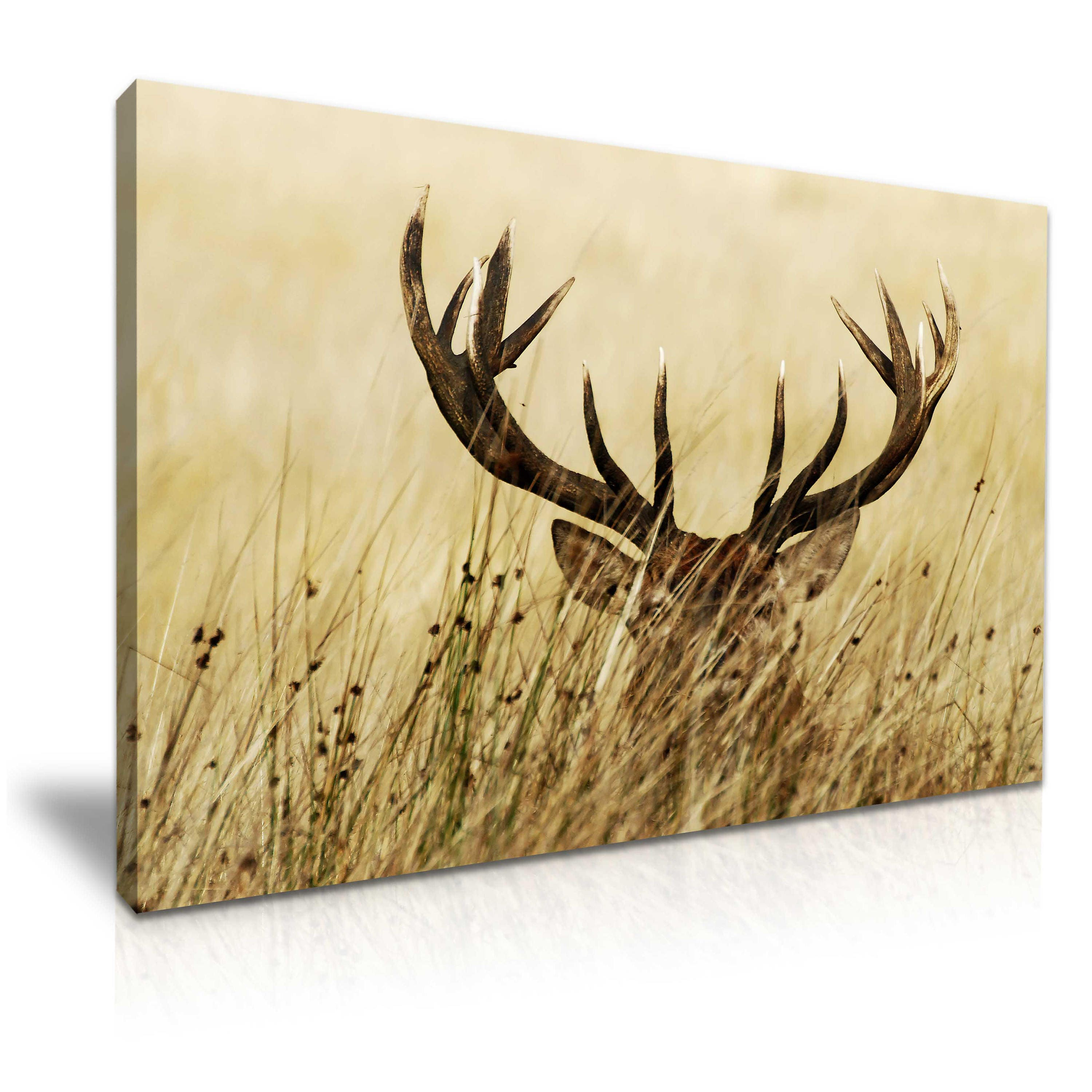 Deer Stag Canvas Wall Art Picture Print 76cmx50cm