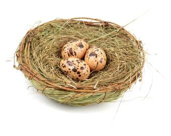 "Bird Nest with Eggs, 6"" wide x 2"" tall - Miniature Fairy Garden Dollhouse"