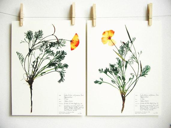 California poppy print set botanical print pressed flower art like this item mightylinksfo Image collections
