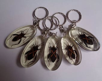 Real 5 pcs insect/bug keychain encased in clear resin