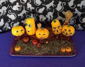 Five vintage Jack-O-Lanterns sitting on the gate. small pumpkins vintage stock, pumpkin patch scene.Halloween