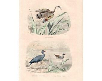 Rare French 19th C natural history print