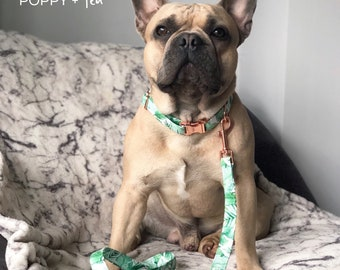 Poppy + Ted | Tropical Jungle - Cheese Plant - Monstera Dog Collar | Rose Gold