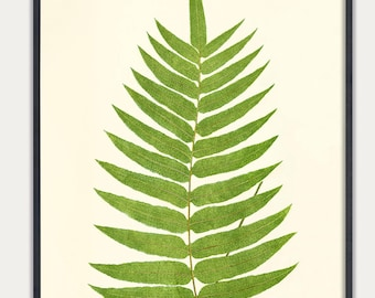 Fern leaf botanical Art   Leaf Print   Fern wall art    Fern Botanical Art    Fern Print   Vintage Fern Prints   Botanical Art Prints