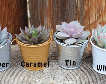 """100 DIY Rosette ONLY Succulents in 2"""" containers with Adorable Pails - Your Choice of Color- Party FAVOR Kit succulent gifts*"""