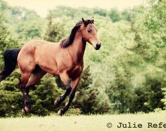 Horse Photography, Running Horse, Horse Art