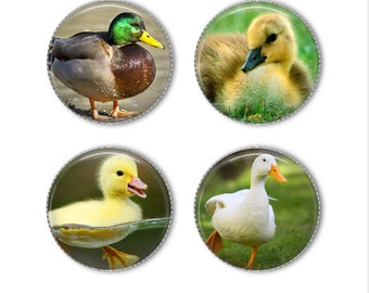 Duck magnets or pins, duck buttons, ducklings, refrigerator magnets, fridge magnets, office magnets