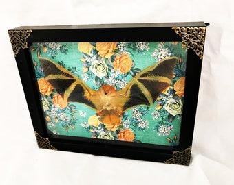 Framed Taxidermy Bat Specimen