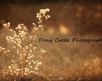 Prairie Flower 16x24 Fine Art Photograph