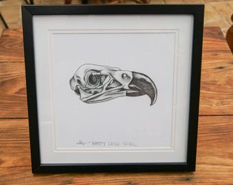 Framed Prints - Harpy Eagle Skull