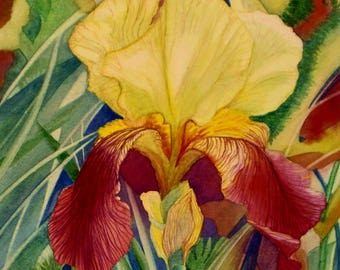 Iris II, Blank Greetings Card of soft yellow and burgandy red Iris, suitable for any occasion.