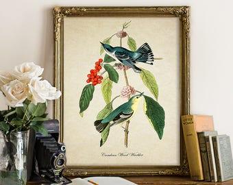 Botanical Print, Wood Warbler Print, Warbler Bird Art, Red Berries, Blue Bird Wall Art Home Decor Vintage Decorative Reproduction B057