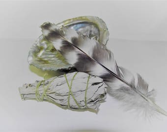 Sage White Smudge Kit Purification Shell Stand White Sage Directions Feather