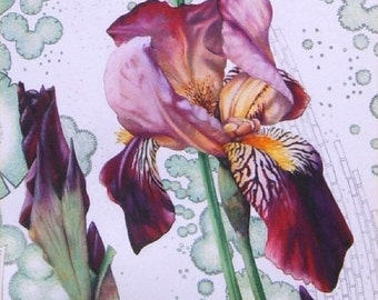 "Original watercolour painting of lilac and dark red Bearded Iris flowers. 10"" x 17"". Botanical art by DaffodilStudio."