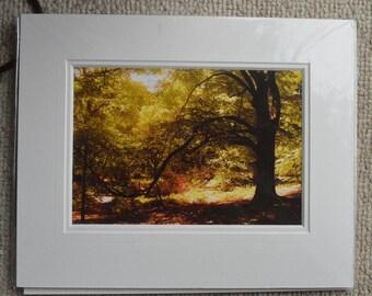 Woodland scene autumn