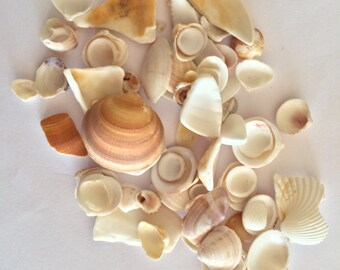 Genuine Sea Shells, Natural Sea Shells, Bulk Sea Shells, Sea Shells for Grafts