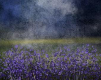 Purple Blossoms Field