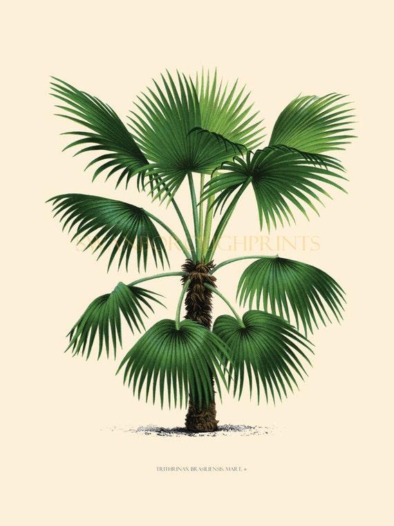 Exceptional Coastal Living Decor Tropical Palm Trees. Home Decor Vintage