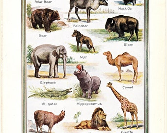 vintage 1920's wild animal print, with species from all over the world, from North to South, a 1926 encyclopedia page.