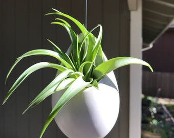 Hanging ceramic container with Air Plant, air plants, terrarium, hanging gift, gift idea, hanging air plant