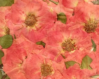 Pressed flowers fully bloomed pink roses with leaves 20pcs for art craft card making scrapbooking