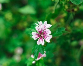 White & Purple Floral Print