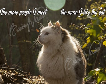 Instant download file - print as you like - cat in the forest - nice phrase - cat-lovers