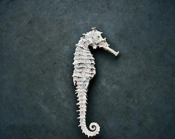 8x12 Seahorse