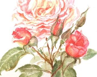 English Rose original watercolour