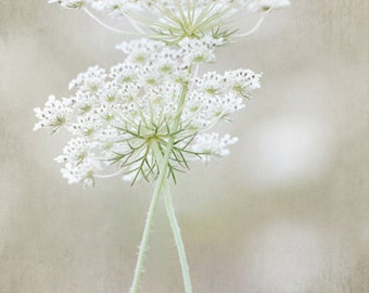 Queen Anne's Lace photo print - flower photography, botanical, neutral colors, photo print, wall art, fine art, nature art, gift for mom