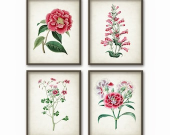 Antique Flowers Wall Art Print Set of 4 - Antique Botanical Home Decor - Pink and Red Flowers Wall Art Set of Four (B121)