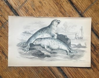 1833 ANTIQUE SEAL ENGRAVING - original antique sealife print - the common seal - seal print - sea mammal - Jardine animal print