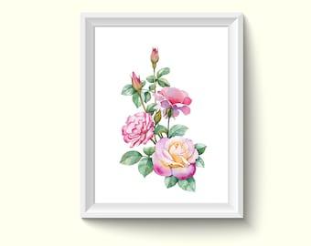 Rose Flower Watercolor Painting Poster Art Print P359