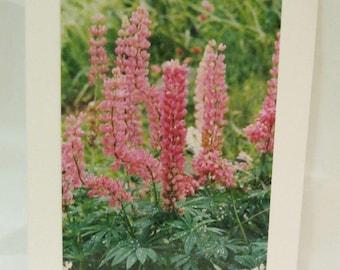 Pink Lupine Greeting Card No Envelope