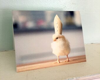Chicken Wearing A Papal Pope Hat Chicks in Hats Baby Animal Cards Cute Stationary #18