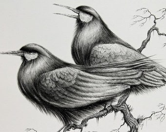 Crow Ink llustration and crow signed mounted drawing and crow pair and crow art and crow picture unframed and crow wall art and gothic crow