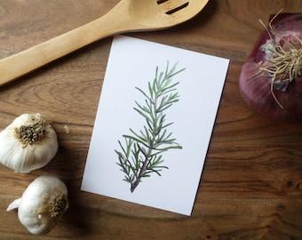 Herb Watercolor Painting Print- Rosemary