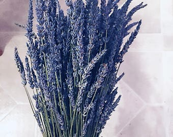 Lavender Stems 2 Bunches Bundles Stems 2017 Fragrant dried lavender for bouquets weddings Grosso English *BEST SELLER*